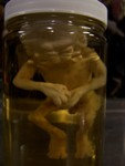 Mutated Fetuses - 2 faced fetus specimen jar69 $50.JPG
