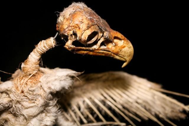 dead bird-53.jpg