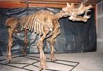 Uintatherium Prehistoric Rhino