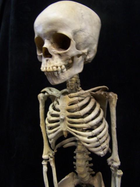 Kid Body S Anatomy