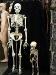 Toddler skeleton 11.JPG