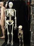 Toddler skeleton 11.JPG