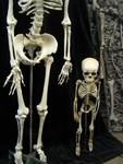 Toddler skeleton 14.JPG