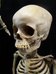 Toddler skeleton 17.JPG
