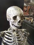 aged forensic Child Skeleton 14.JPG