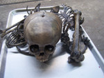 antique toddler disarticulated skeleton 27