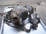antique toddler disarticulated skeleton 8