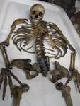disartculation child skeleton 74.JPG