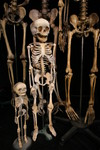 skeleton family_0595.JPG