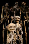 skeleton family_0604.JPG