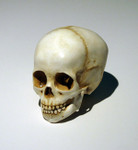 skull_4yearold