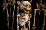 toddler skeleton_0599