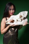 camel skull  66.jpg