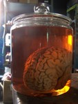 brains - brain jar 4 $75.JPG