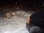 Deer Props 020.jpg