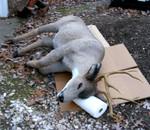 Deer props - deer0003.jpg