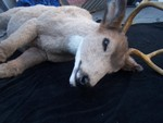 Deer Props - full size deer 45.JPG