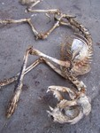 cat skeleton 2