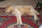 dead dog alex.jpg