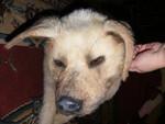 dead dog alex 2.jpg