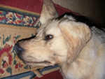 dead dog alex  25.jpg