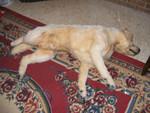 dead dog alex 30.jpg