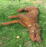 Dog props - dead dog labrador 2_a
