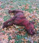 dog props - dead pit bull 28.jpg