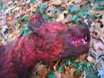 Dog Props - dead pit bull 32.jpg