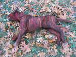 Dog Props - dead pit bull 48.jpg
