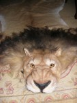 faux lion rug 800.jpg