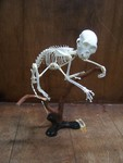 monkey skeleton 14