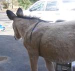 lifesize realistic Donkey