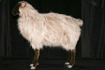 Goat and Sheep Props - lifesize sheep 26.jpg