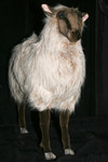 Goat and Sheep props - lifesize sheep 27.jpg