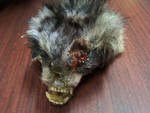 Wildlife Props - Faux Roadkill Prop