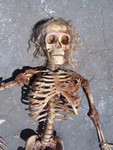 Dessicated Child Skeleton  sized 63