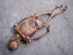 Remy Mummy  sized 20
