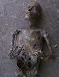 mummy jack 550 c