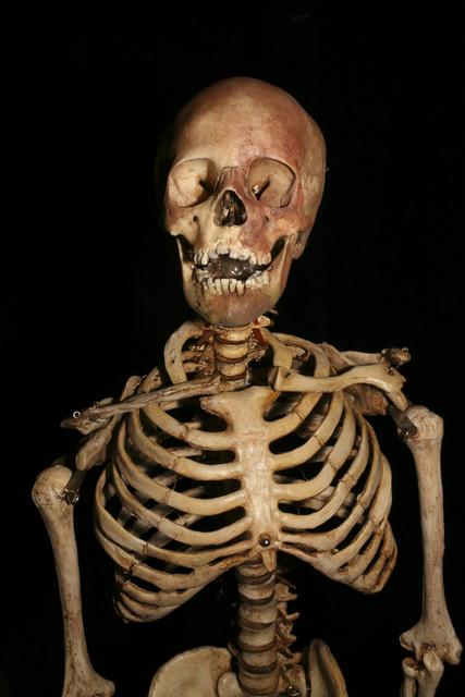 Halloween Body Parts Props