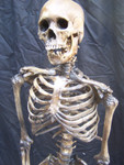 Antique seamless skeleton with  Feng skull 78.JPG