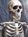 Antique seamless skeleton with  Feng skull 79.JPG