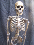 Antique seamless skeleton with  Feng skull 80.JPG