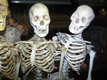 assorted crime scene skeletons 4