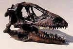 Deinonychus Raptor skull.JPG