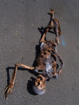 Burnt Riley Skeleton 09.JPG
