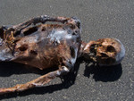 Burnt Riley Skeleton 114.JPG
