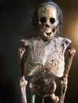 Highlight for Album: Realistic Mummified Skeletons and Skulls