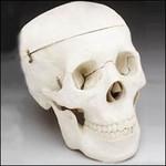 3 part medical skull 20.jpg
