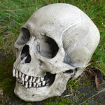 Budget Avery 1 piece museum skull